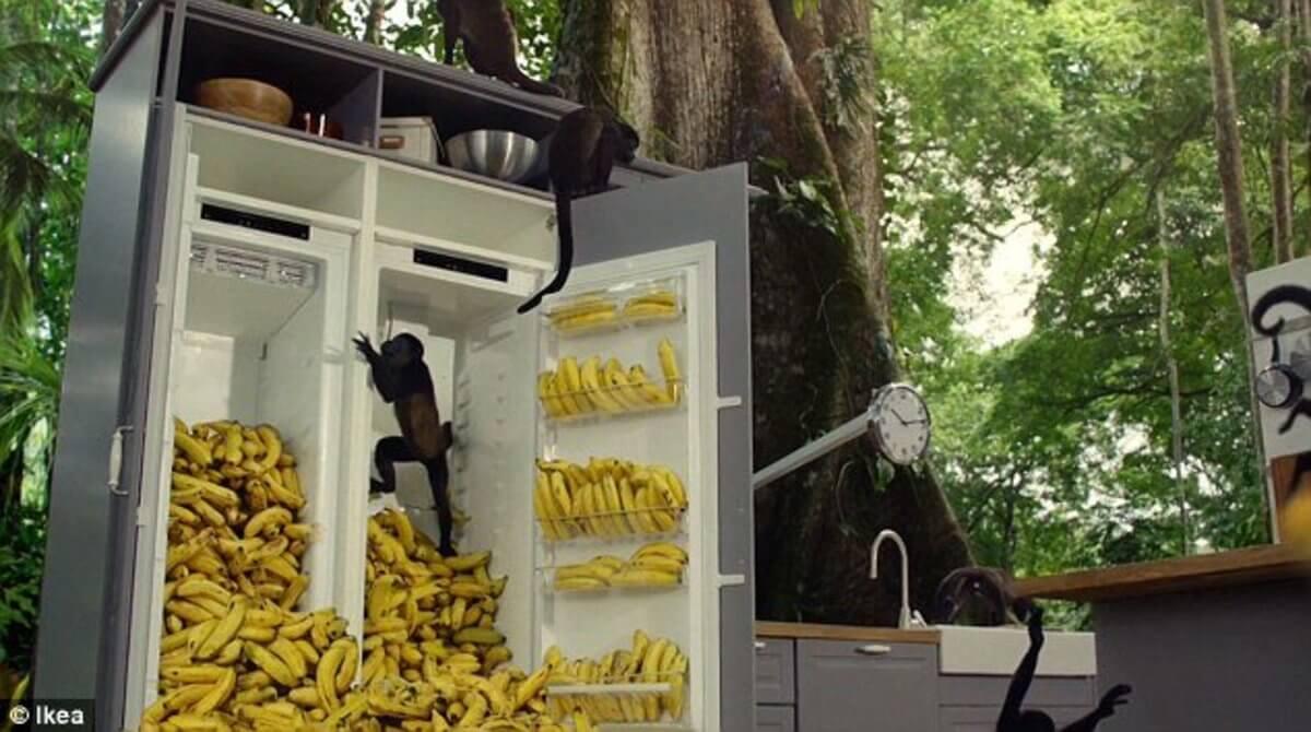 dumpster diving v dansku, banany
