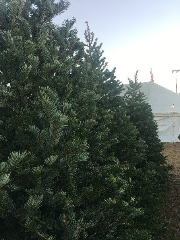 Američania berú výber vianočného stromčeka vážne