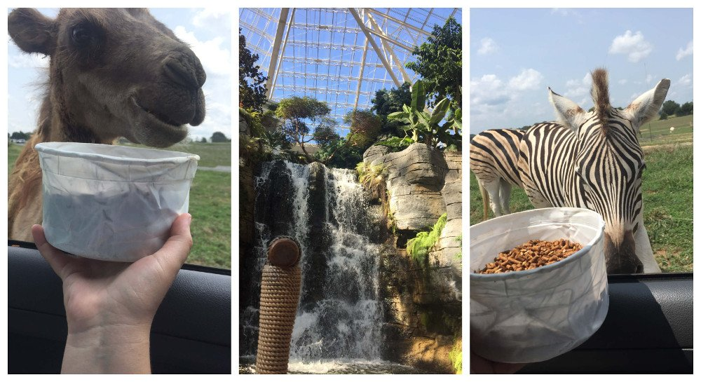 Výlety počas stredoškolského pobytu v USA, safari zoo